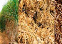 Biomassa é uma energia limpa
