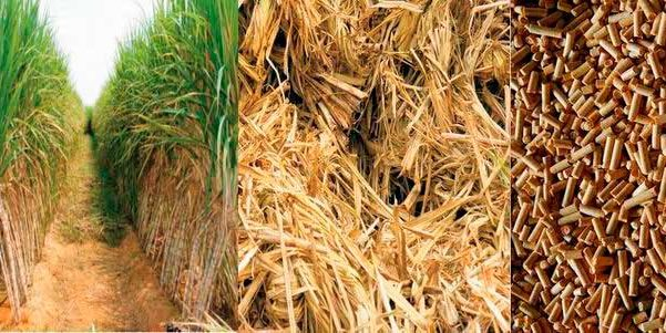 Photo of Biomassa é uma energia limpa?