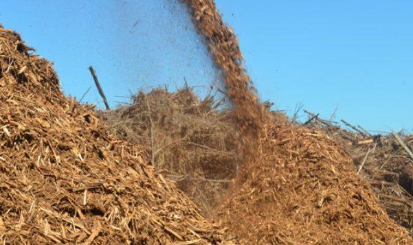 Energia verde e a Biomassa